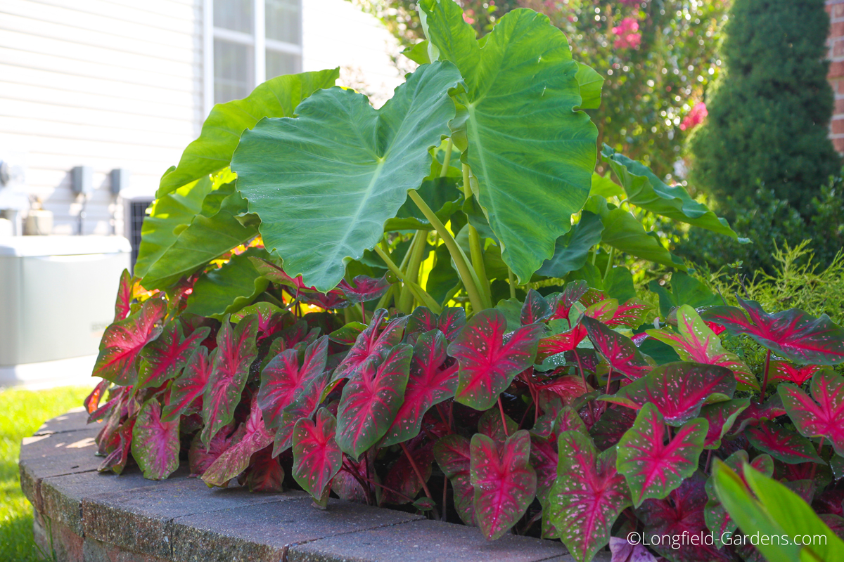 Add Beauty And Extend The Garden Season With Spring