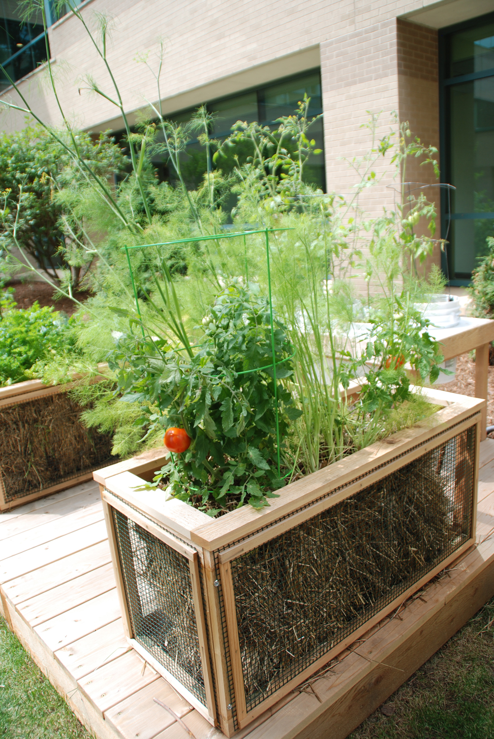 create a planting bed for seeds by covering the straw bale with a one to two inch layer of planting mix - Straw Bale Garden