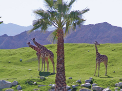 Living Desert Zoo and Botanical Gardens