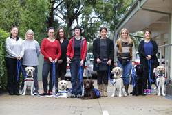 A row of trained assistance dogs and their human partners line up at a graduation ceremony.