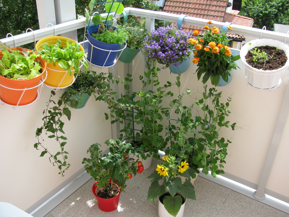 These Are Lightweight Portable And Easily Stackable Hanging Garden Is Great For