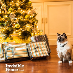 Personalities Pay off With This Holiday Season's Pet Gift Guide
