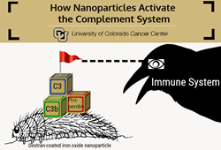 Three-part assembly of C3 convertase on nanoparticle surface leads to complement system activation