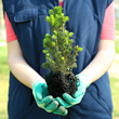 Plant Therapy Earth Day Tree Planting
