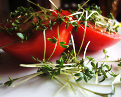 Microgreens pack a big nutritional punch.