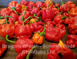 Dragon's Breath pods are the hottest chillies in the world