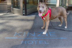 Chicago S Kinzie Hotel Relaunches Renowned Pamper Your Pooch Package