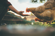 New Program Sets the Standard for Animal Welfare in Institutional Food Purchasing