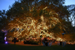 Sokol Blosser Wine Dinner Under the Tree at The Houstonian