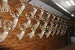 Boone & Crockett Whitetail Deer Mounts Collection