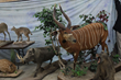 Warthog kudu and Monkey in taxidermy auction