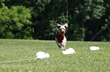 Lure coursing for dogs at Canine Camp Getaway
