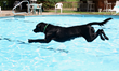For dogs who love to swim, Canine Camp Getaway's dog-friendly pool is a popular destination