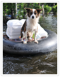 National Disaster Preparedness Tips for Pets from Embrace Pet Insurance