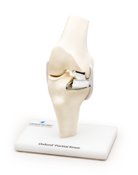 Oxford Partial Knee Model