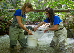 Biologists release baby Brook Trout in a mountain stream.