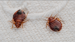 How To Prevent Bed Bugs From Coming Home With You