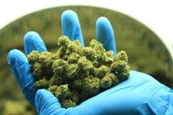 Medical Marijuana Veriheal
