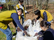 Tzu Chi volunteers pick up litter at a park in Edison NJ