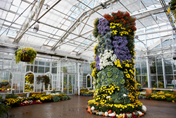 Picture of a column of chrysanthemums at Frederik Meijer Gardens & Sculpture Park