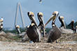 Charleston's Coastal Conservation League Uses Vicon Camera to Bring Wildlife Up Close