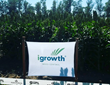 Sorghum field with igrowth technology