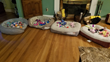 Worldwise Donates Pet Beds Toys to Alexanders Angels Buddy Walk 2018