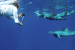 Dolphins and You guest swims with wild dolphins in Hawaii