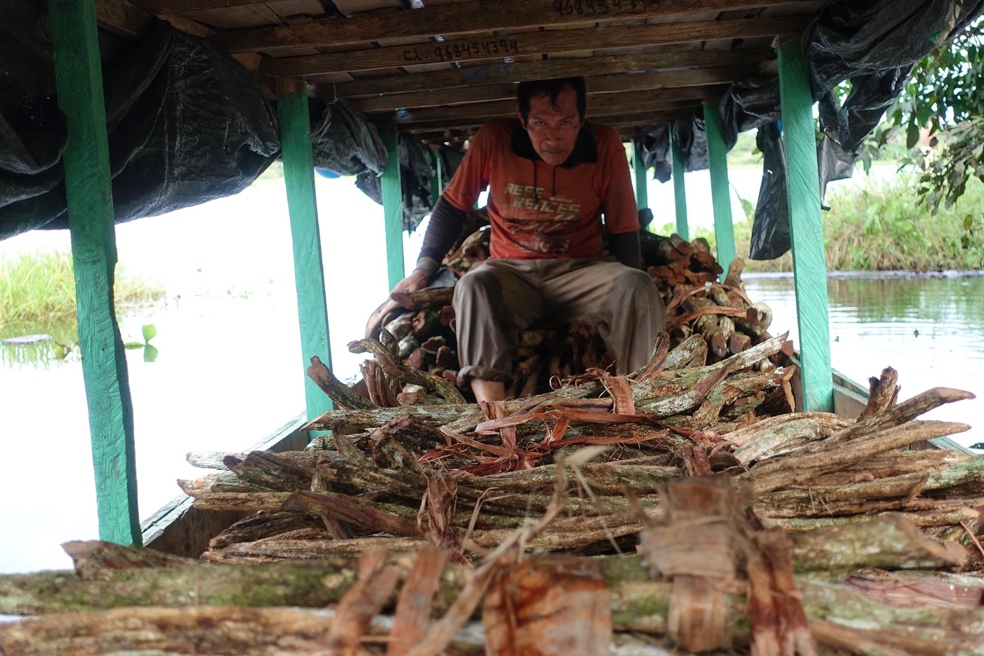 Amazon Ayahuasca Sustainability Study Conducted by Medicine Hunter