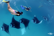 Support manta ray conservation with Manta Trust Foundation when you Travel Kindly.