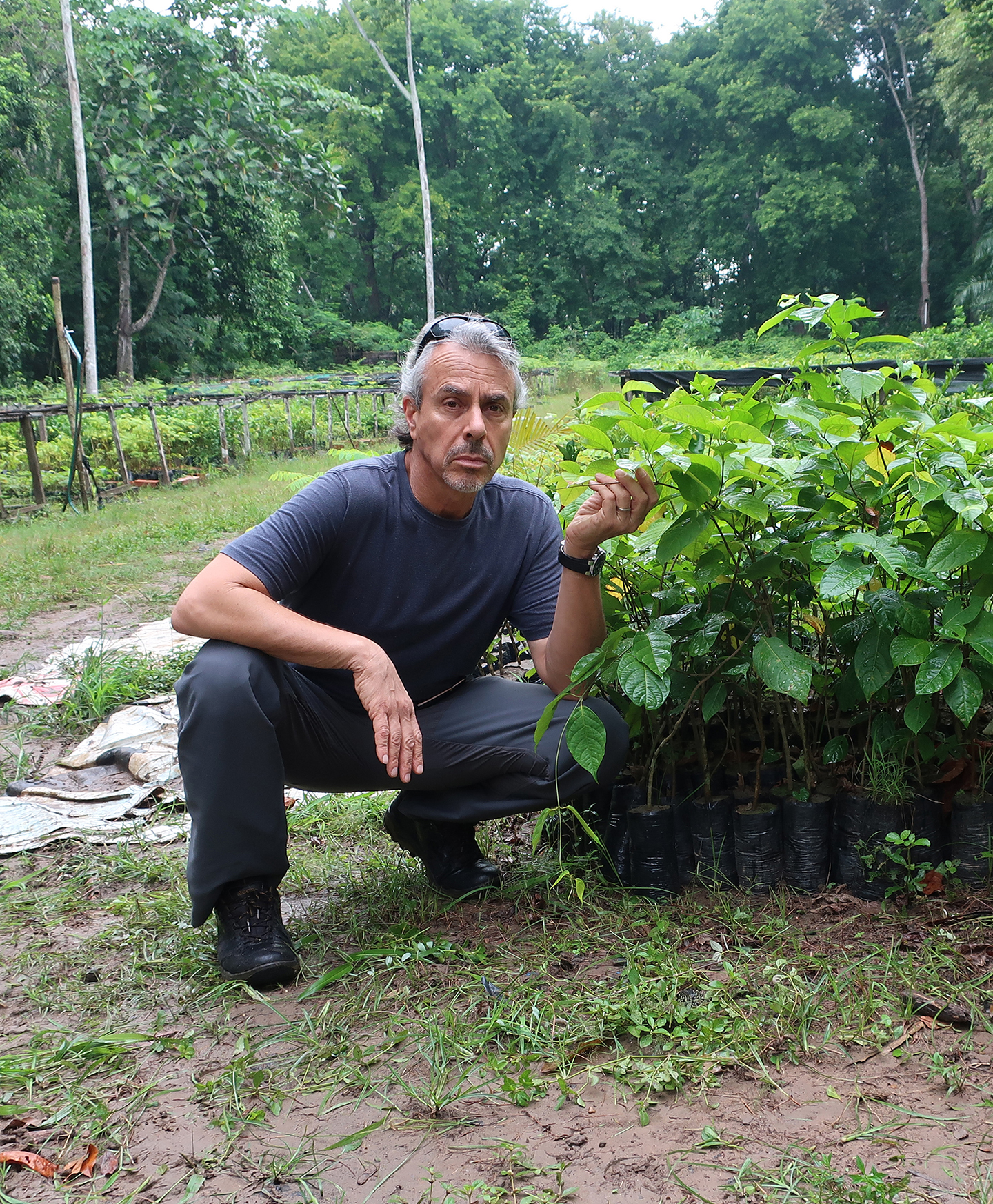 Amazon Ayahuasca Sustainability Study Conducted by Medicine Hunter