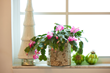 The houseplant trend has steadily taken off with both new plant parents and regular green thumbs.