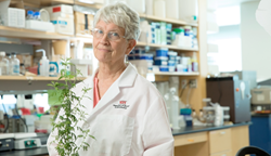 Worcester Polytechnic Institute biologist Pamela Weathers with Artemisia, or wormwood, which outperformed the most commonly used drug against the tropical disease schistosomiases in a clinical trial.