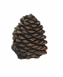 Gas fireplace media now includes decorative pine cone