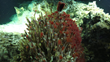New Undersea Maps Lead to Hydrothermal Vent and Species Discoveries