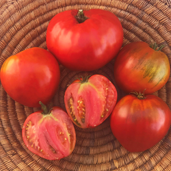 'Anthony's Passionate Heart' organic tomato seeds from TomatoFest