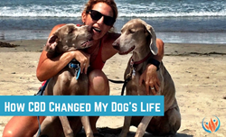 How CBD Changed My Dog's Life