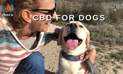 CBD Products for Dogs