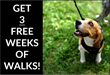 Park Cities Pet Sitter Has Introduced an Enticing New Promotion for 2019 for Pet Owners Who Need Recurring Dog Walk Service.