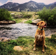 The Sierra Nevada Resort is conveniently located just a few miles from popular dog-friendly hikes, lakes and rivers to explore.
