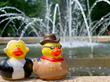 Washington Ducky and Teddy Ducky at one of DC's Many Fountains