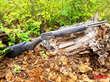 Grizzly Custom Guns Announces Build-to-Order Marlin 1894 Semi-Auto Pistol Carbines Chambered in 10mm or .45 ACP and a Marlin 336 Chambered in .450 Bushmaster