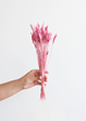 Dried Pink Arrow Grass in Pink