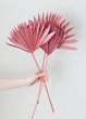Pink Preserved Palm Leaves