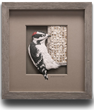 Featured Downy Woodpecker Paper Sculpture by Renowned Artist Calvin Nicholls (C) 2019.