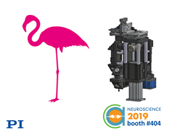 Flamingo Light-Sheet Fluorescence Modular Research Microscope at PI's Booth #404