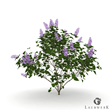 RPC of Common Lilac