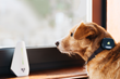 Findster Home: Track your pets' location 24/7 from anywhere!