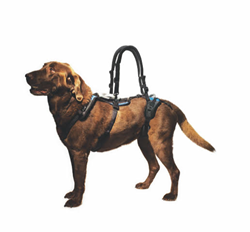 dogs, harness, walking handles, aging dogs, slings