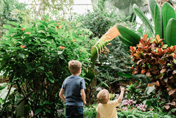 Two children look at butterflies flying in a tropical conservatory